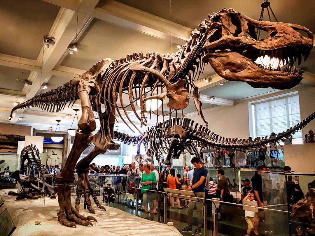 Seu Guia para Visitar o American Museum of Natural History ...
