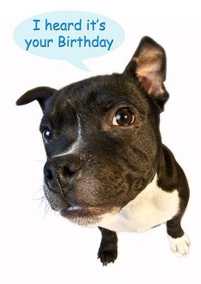 A4 Staffordshire Bull Terrier Birthday Card CUP47664443