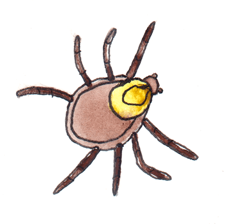 watercolor painting of a wood tick