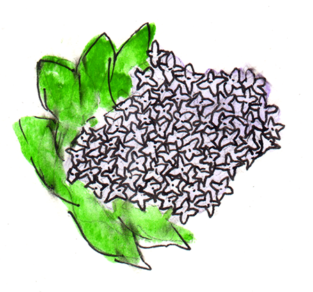 watercolor painting of lilac flowers