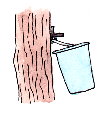 watercolor painting of a bucket hanging from a tap in a maple trunk