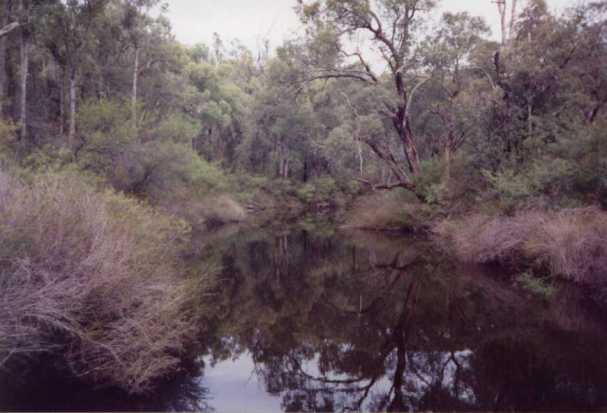 Typical Western Australian Bush