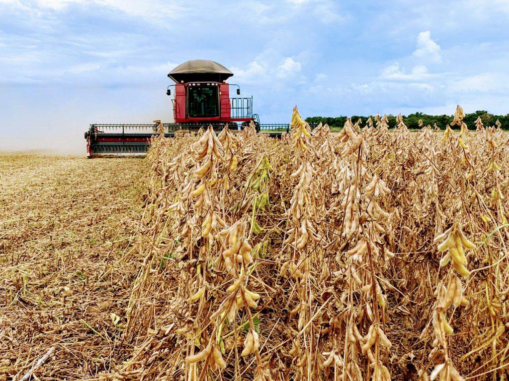 A região do Mato Grosso conhecida como Nordeste, deve se tornar em mais três safras, na segunda maior produtora de soja do Mato Grosso.