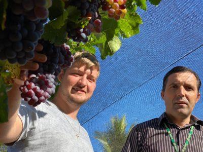 Geovani e Gidomar empaer fiory uva