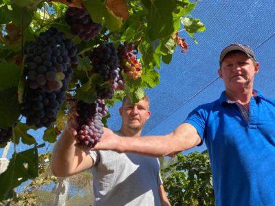 Geovanie Gilberto fiory uva