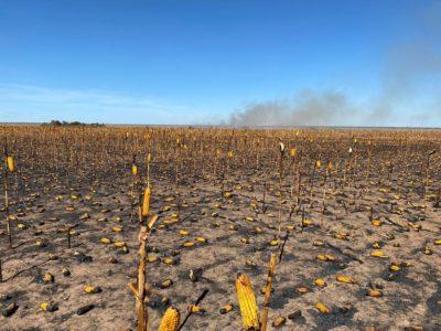 Incêndio atingiu 1,8 mil hectares de lavoura em Querência — Foto Divulgação