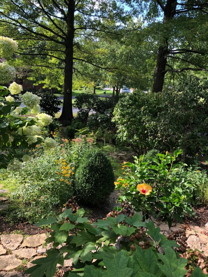 shade garden with various flowering plants