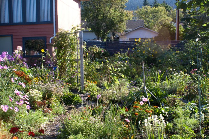 summer garden in bloom