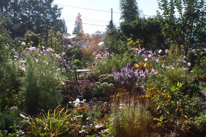 summer garden in full sun