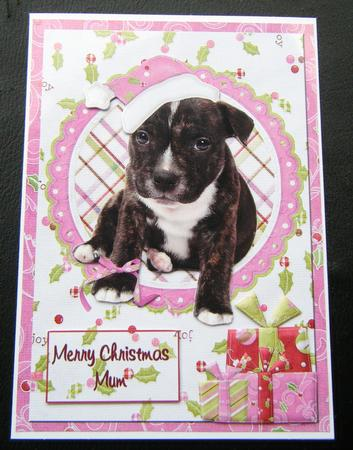 Staffordshire Bull Terrier Puppy Christmas Card Pink