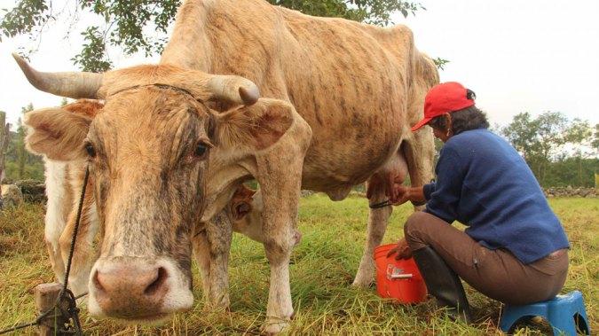 La ganadería es una de sus principales actividades económicas.