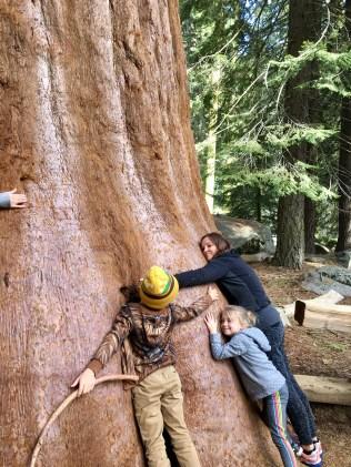 More Tree Huggers