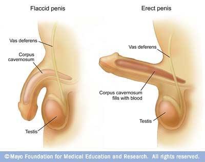penis movement in vagina