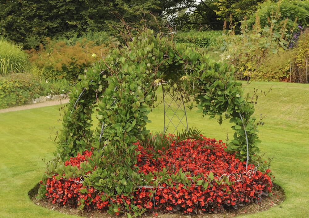 28 Luscious Backyard Vine Ideas on Vine Decor Ideas  id=44116