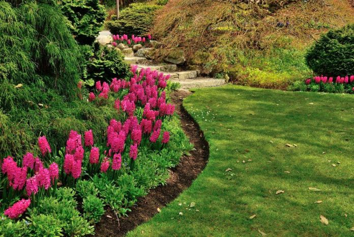 A grassy pathway is connected by stepping stones and looks alive and vibrant thanks to the beautiful and blooming tulips.