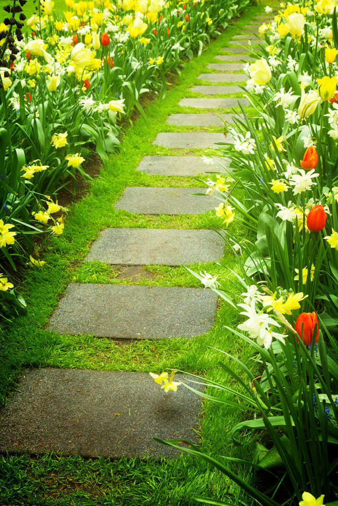 This simple pathway with a few rectangular pavers looks classy because of the bright colored tulips and daffodils.