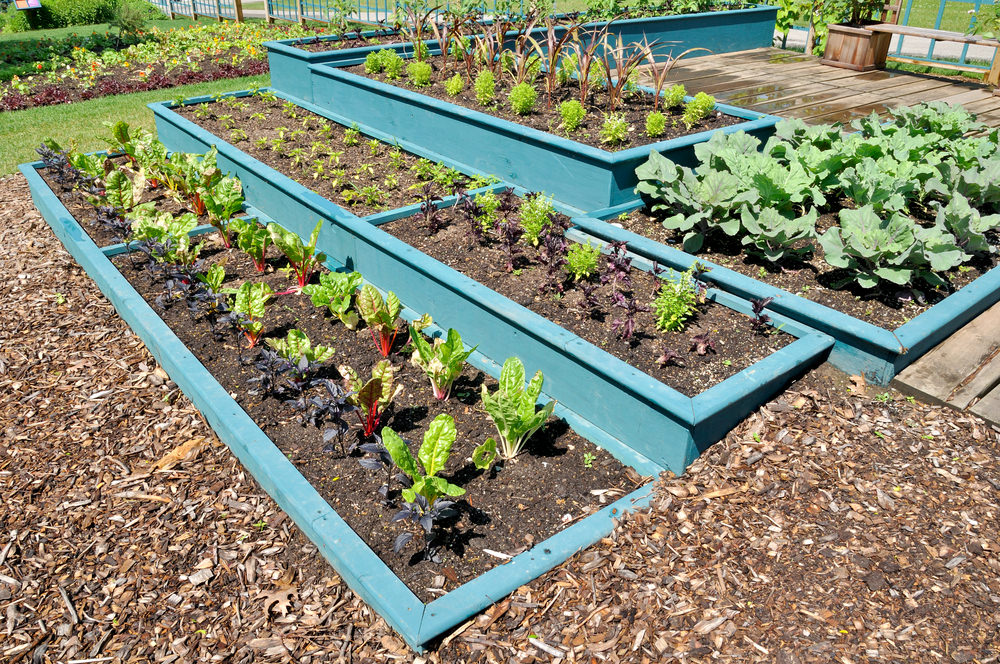 Making Your Own Raised Vegetable Garden