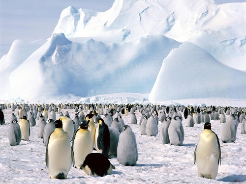 Penguins Take Over the World