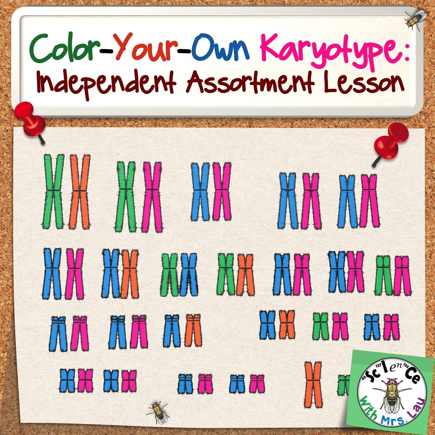 Color Your Own Karyotype Activity Store