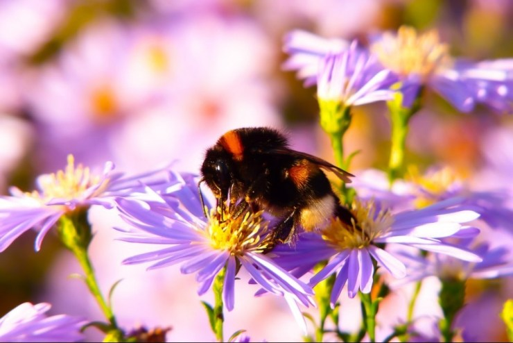 honey bee flower nectar