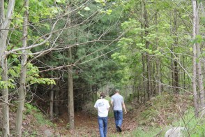 15 year old growth forest from one of Green Forests Work's original test plots
