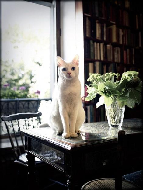 Monsieur Kitty