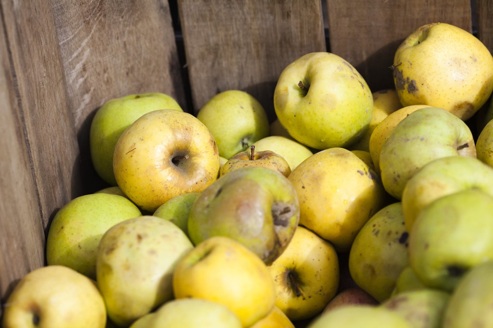 A Free Market Solution to Food Waste