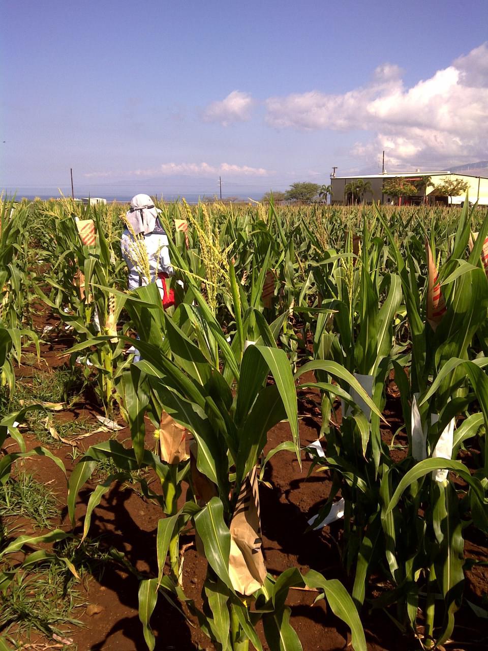 A Libertarian Visits Monsanto