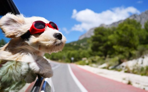 2. Socialize | 10 Ways To Make Your Pet Happier | Life360 Tips