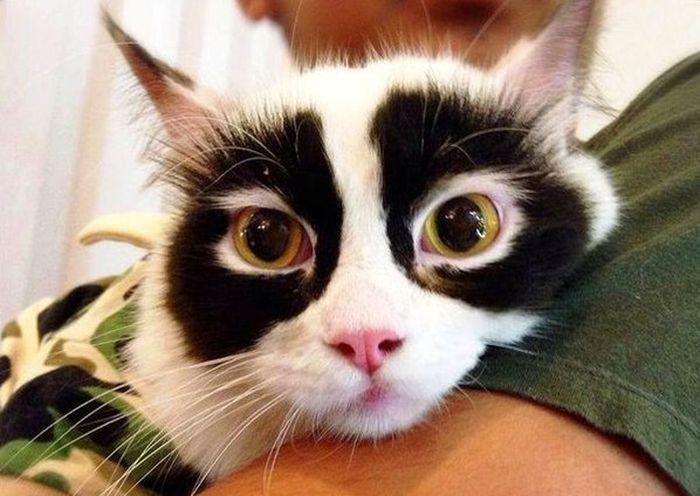 Marca de antifaz - marcas de pelajes de gatos muy divertidas