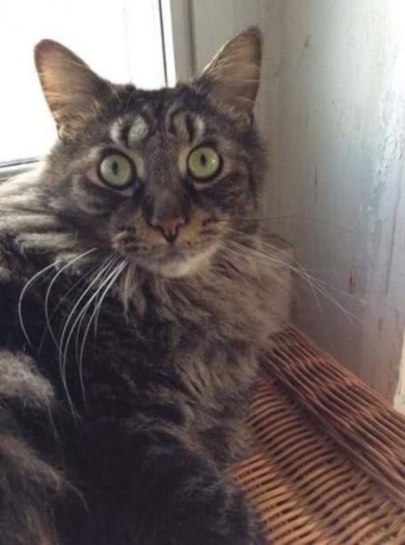 marcas de pelajes de gatos muy divertidas - gato con 4 ojos