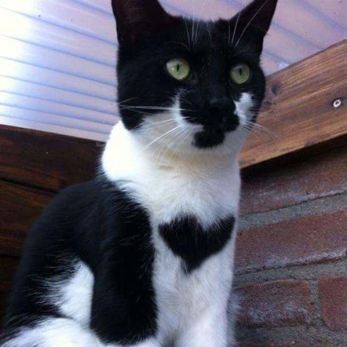 marcas de pelajes de gatos muy divertidas - corazon