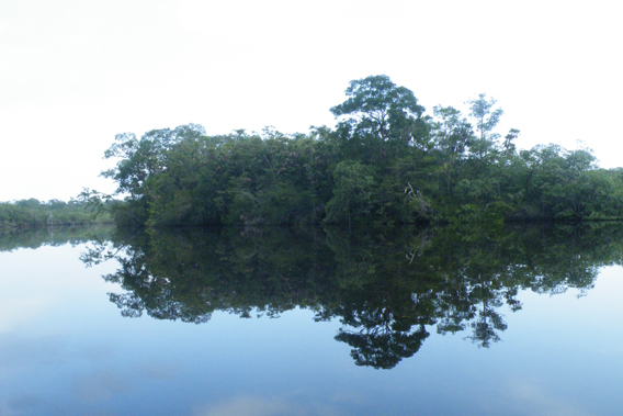 Dawn breaking over Black Creek, Sarstoon Temash National Park. Photo by: Robin Oisín Llewellyn.