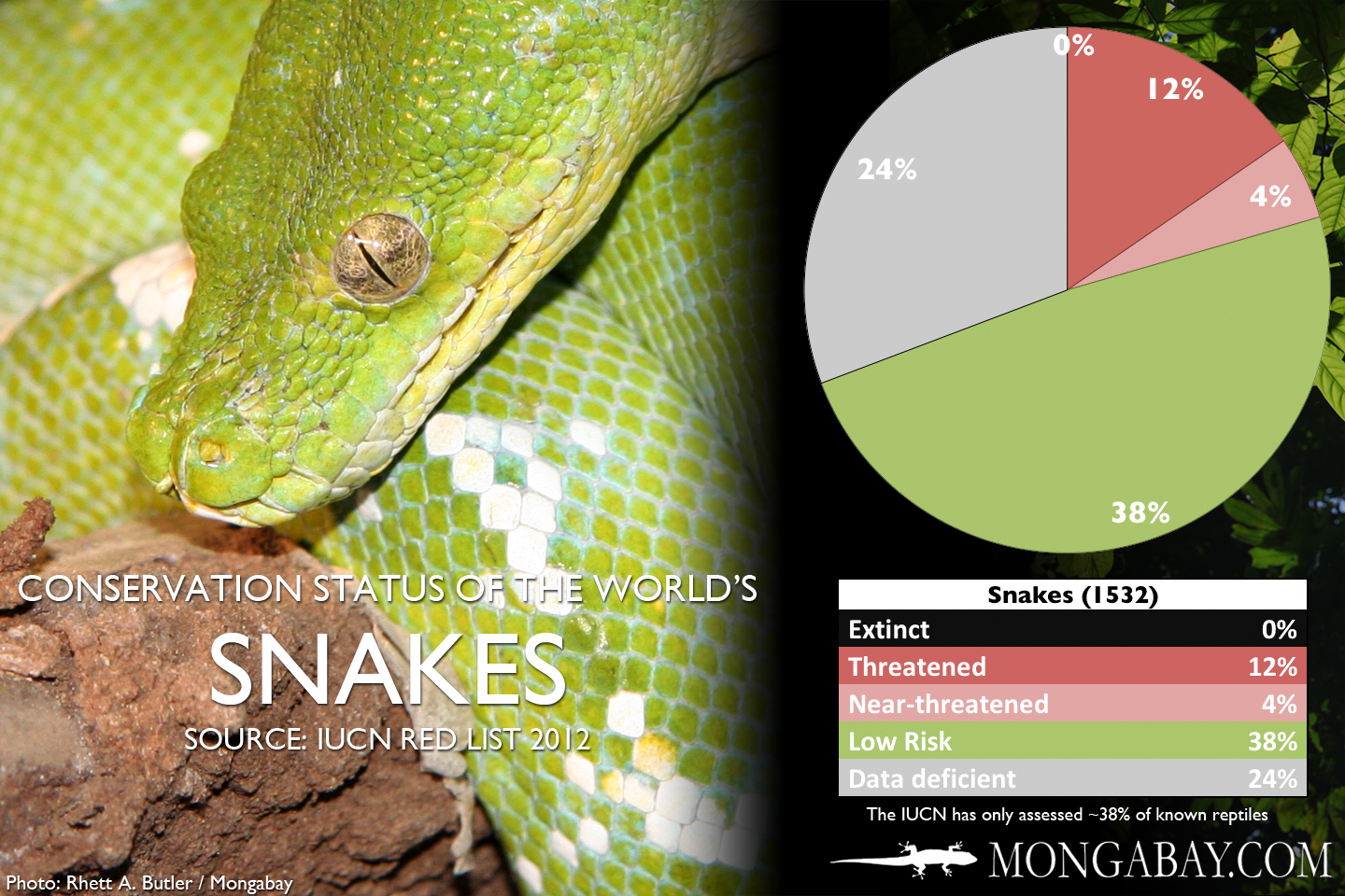 Chart The World S Most Endangered Snakes