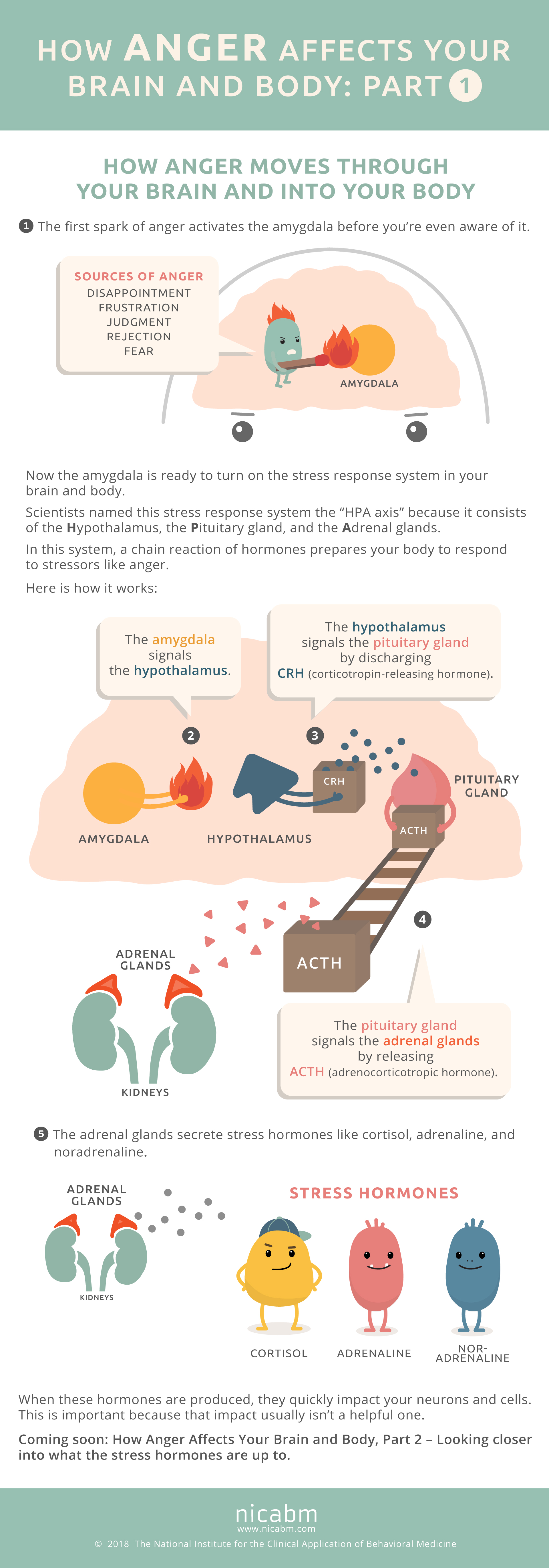 How Anger Affects The Brain And Body Infographic