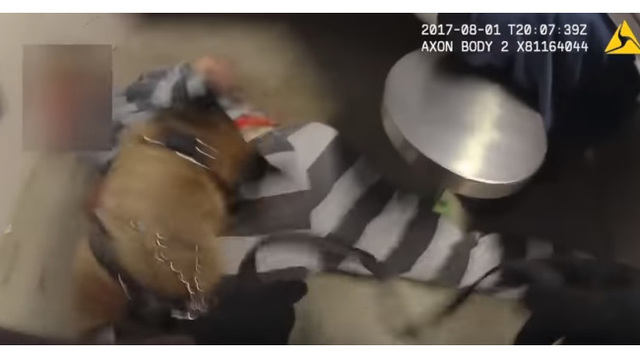 DA: No criminal charges for use of K9 on jail inmate