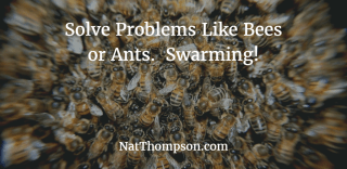 swarming-to-solve-problems