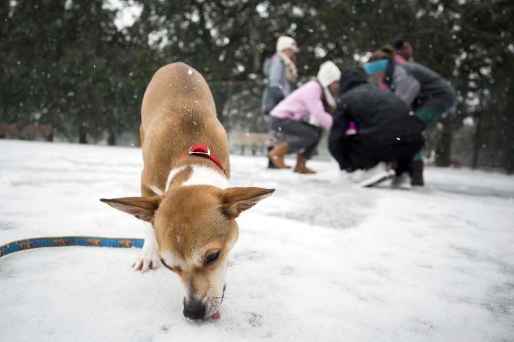 Seeing her first winter weather, 9-month-old Roxie, eats snow off the ground of the public basketball courts at Forsyth Park, Wednesday, Jan. 3, 2018, in Savannah, Ga. A brutal winter storm scattered a wintry mix of snow, sleet and freezing rain from normally balmy Florida up the Southeast seaboard Wednesday. (AP Photo/Stephen B. Morton)