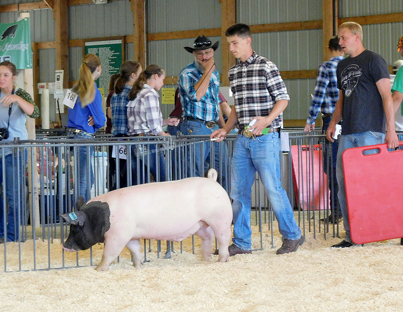 Good Turnout For 4 H Swine Show At Brown County Fair