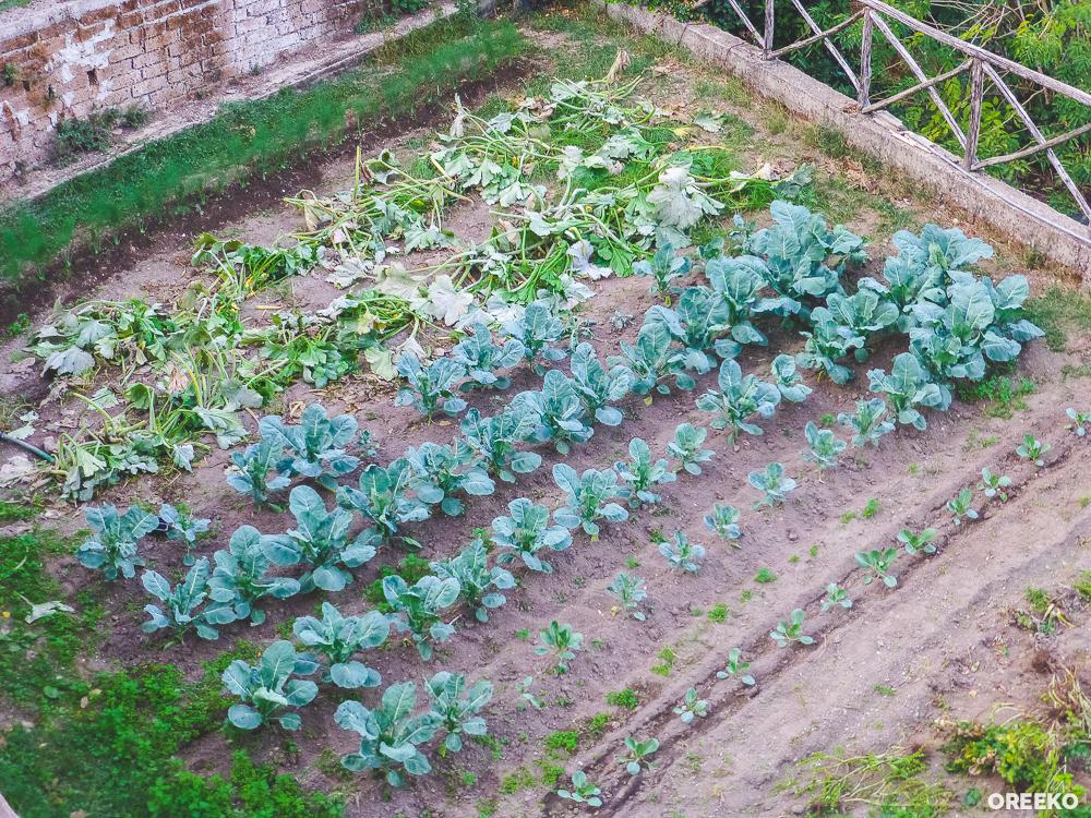 Herb and Vegetable Garden Bracciano, Lazio Italy via oreeko