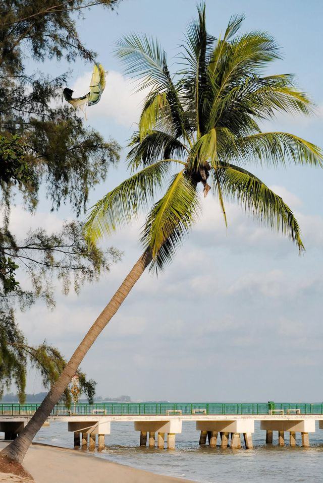 A palm tree hanging over a beach in Singapore's Katong/Joo Chiat neighborhood