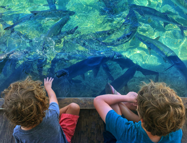 Two young boys point at sharks in a tidal pool
