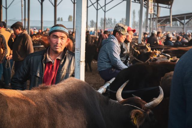 An ox trader in Central Asia poses in front of his livestock.