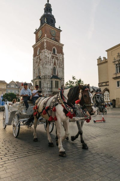horses in krakow's old town square