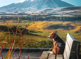 Dog Sitting on Bench in Ecuador