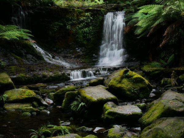Rainforest waterfall, Tasmania