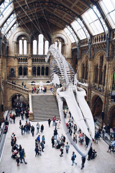 natural history museum london pauline loroy