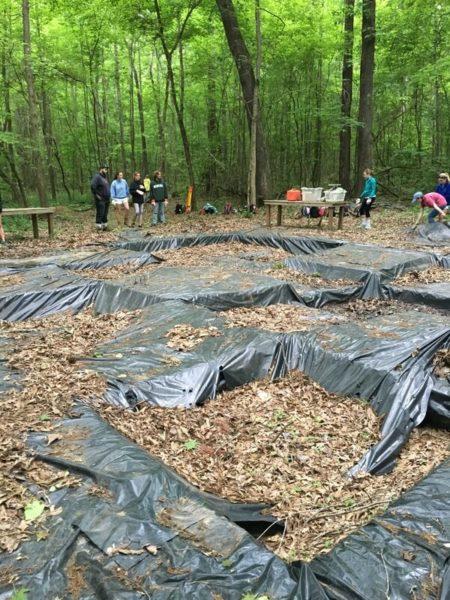 digging plantation history