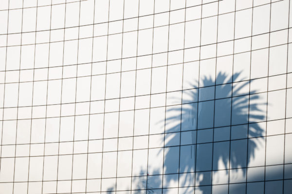shadow of palm tree reflected on building exterior
