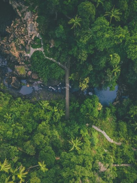 overhead view of tropical rainforest